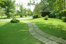 các loại cỏ cảnh